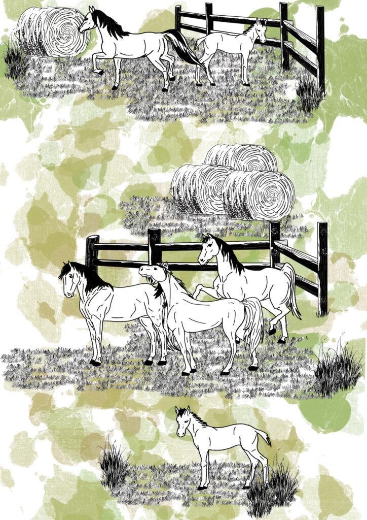 Glesni Ann Rees_horses placment 2