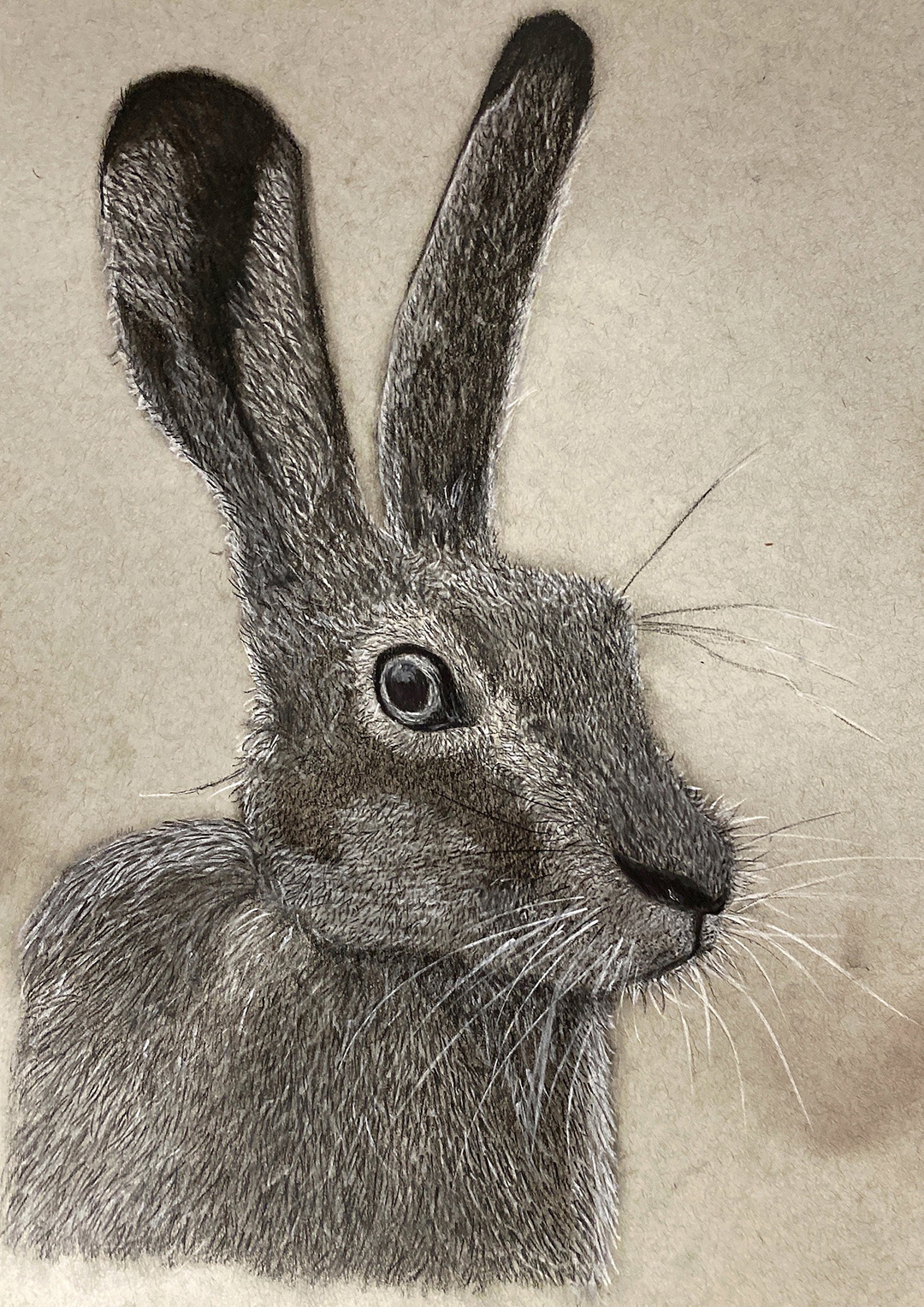 A finely detailed drawing of a charcoal hare