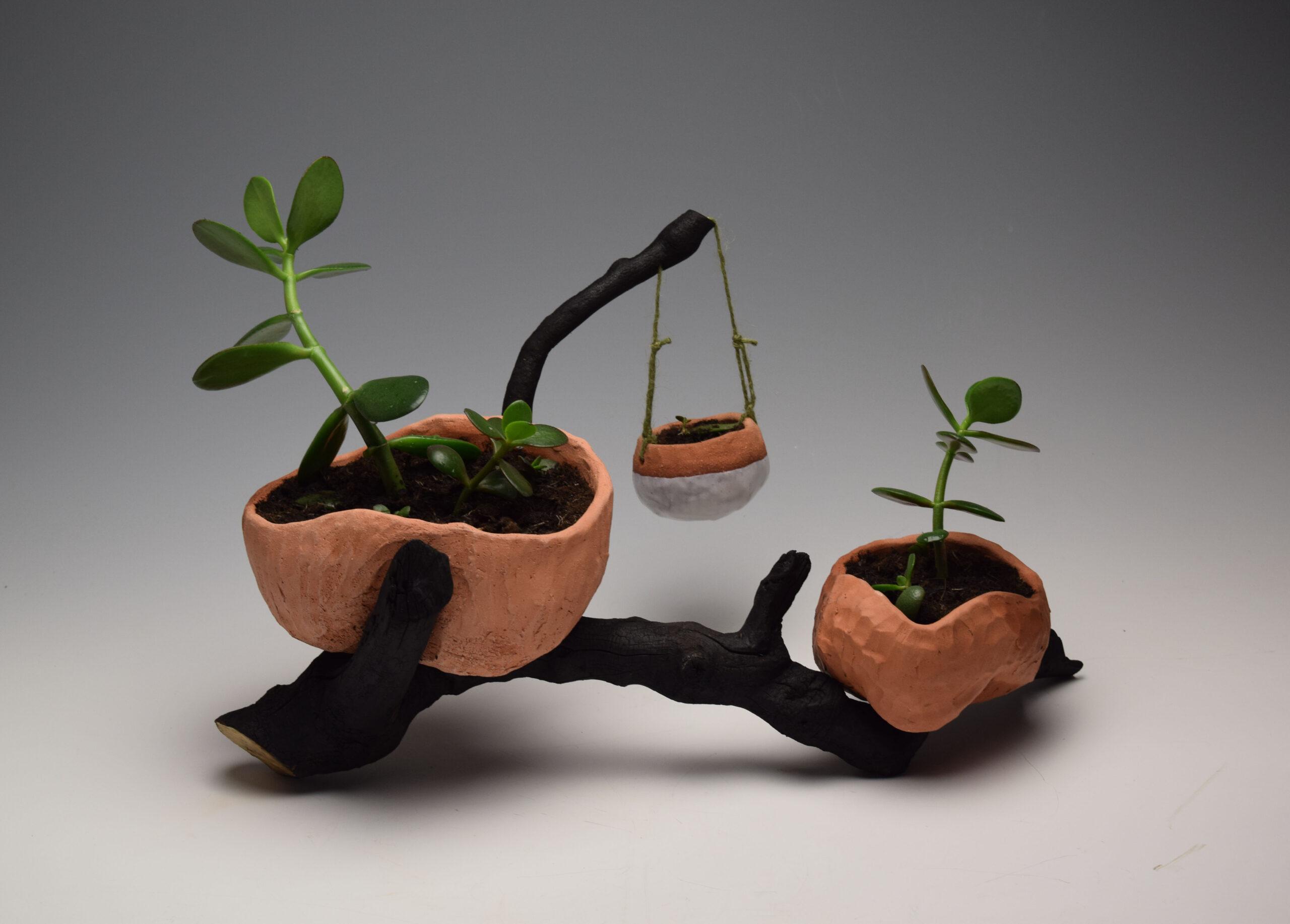 Balancing ceramic pots on burnt branch